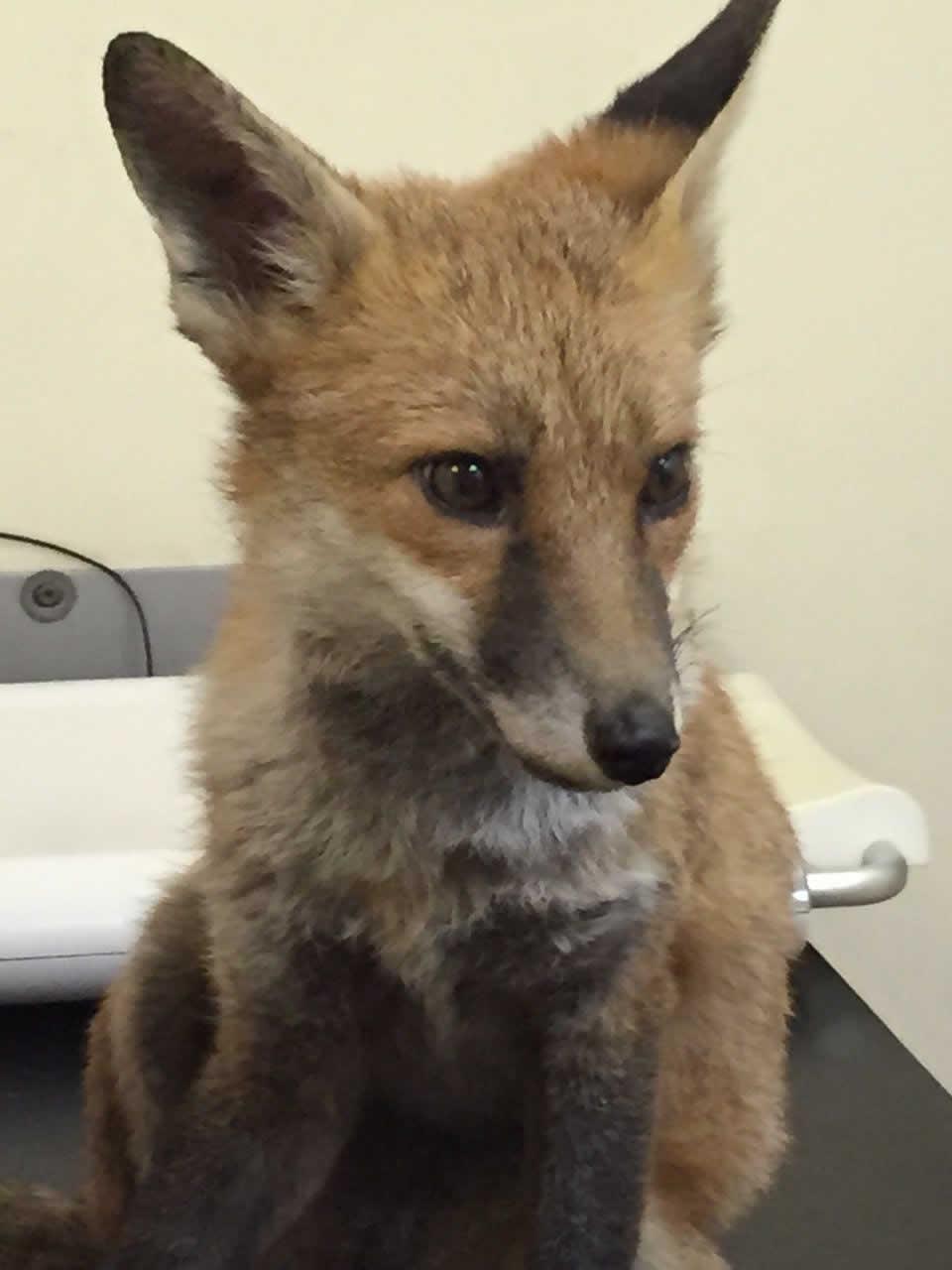 Patient at Horsefield Veterinary Practice in Horsham