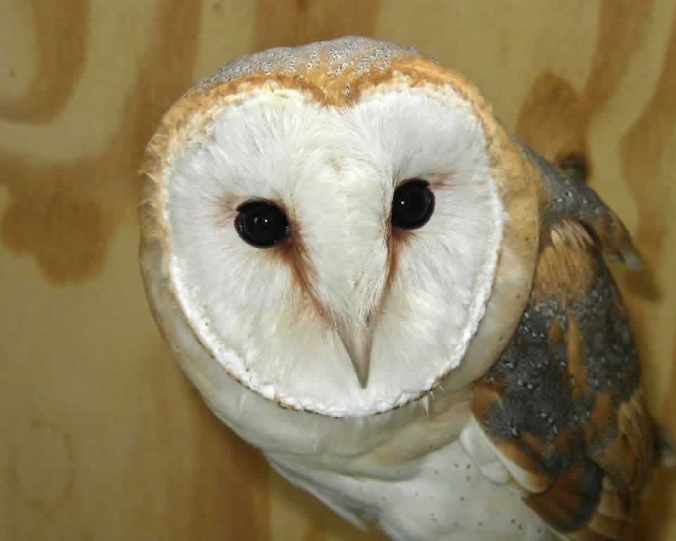 owl Horsebridge Vets Hailsham