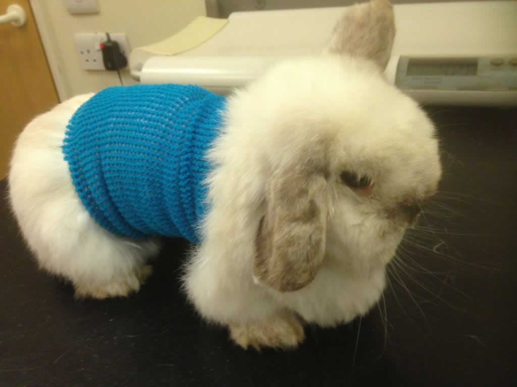 Patient at Horsefield Veterinary Practice in Hailsham