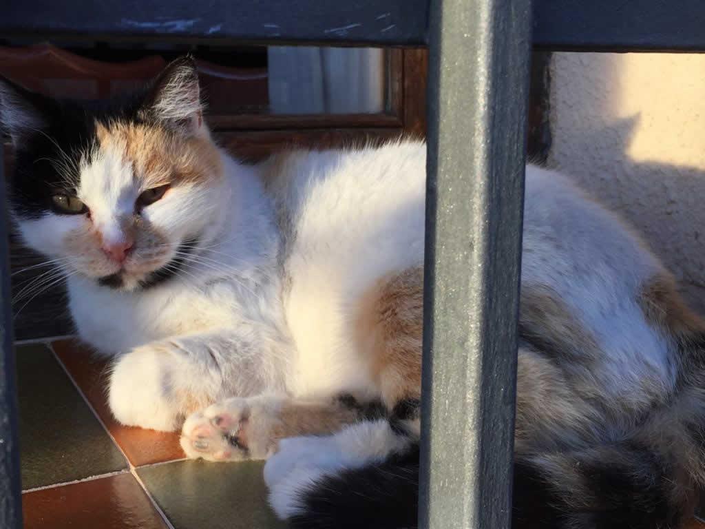 Cat at Horsefield Veterinary Practice in Hailsham