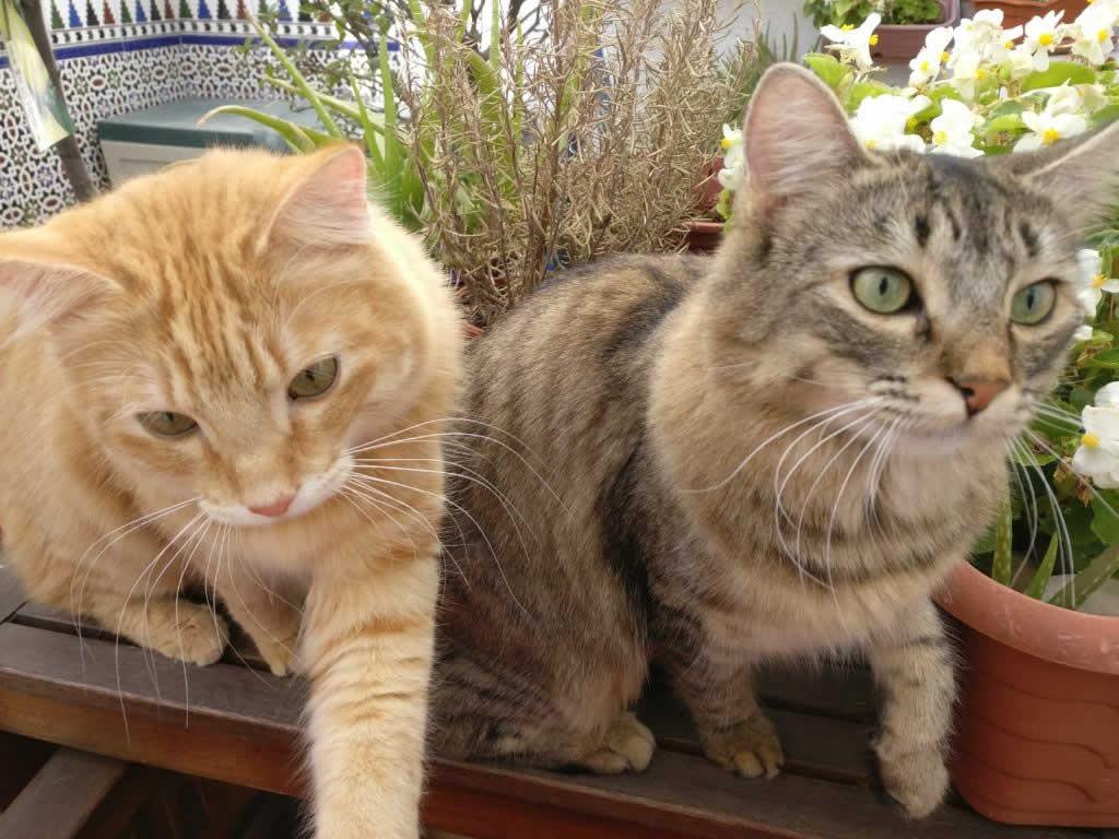 Cats at Horsefield Veterinary Practice in Hailsham