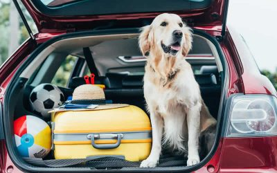 Pet travel plans are changing with Brexit