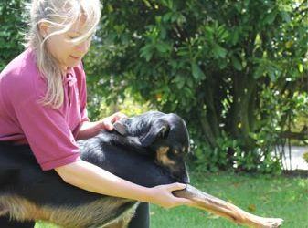 We Offer Veterinary Physiotherapy Services