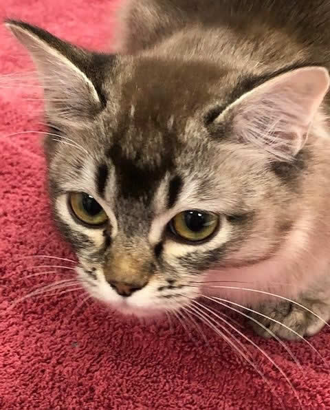 Kitten at Horsefield Veterinary Practice in Hailsham